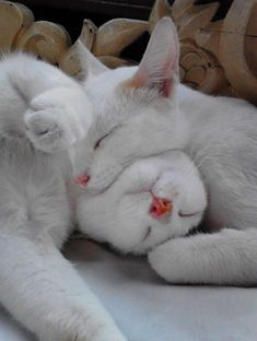 THIS WAS THE ONLY WAY THAT MOMMA CAT COULD GET HER LITTLE ONE TO TAKE A NAP..............ccp