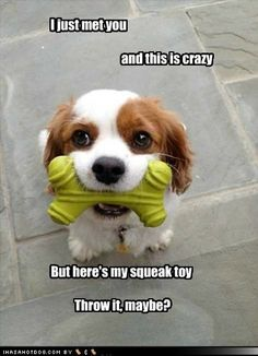 I just met you and this is crazy but here's my squeaky toy. Throw it?  Maybe?  Haha!