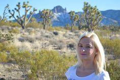 Mojave Desert - Arizona, USA