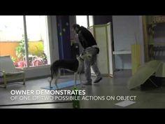 Ο σκύλος έχει παρόμοιο είδος μνήμης με τον άνθρωπο [Video] - All About Dog