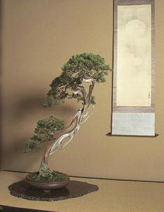 Bonsai Art, Bonsai Garden, Bonsai Tree Types, Bonsai Trees, Washitsu, Stock Photo Sites, Japanese Interior Design, Aztec Art, Weird Pictures