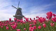 Feito Pelo Homem Windmill  Flower Nature Architecture Building Papel de Parede