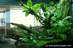Green Chapter - Stunning Aquarium Simply For You