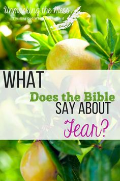 What Does the Bible Say about Fear? Are you fearful and tense? How do we live in this scary world without letting these emotions overwhelm? Bible verses about fear. Family Bible Verses, Bible Verses Quotes, Faith Quotes, Scriptures, Christian Marriage, Christian Women, Christian Faith, Christian Living, Christian Quotes