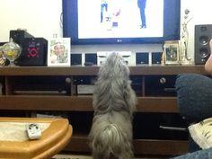 Adora ver bichinhos na tv!
