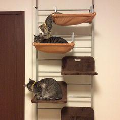 「ハンモックもう一つ追加してあげようかなー。  #cat#tabbycat#rescuedcat#kitty#kitten#猫#ねこ#キジトラ#サバトラ#子猫#ねこら部#保護猫#ココちゃん#きみちゃん#はーちゃん」