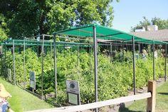 The Arcadia Edible Garden Tour Photos
