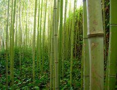 tela de bambu