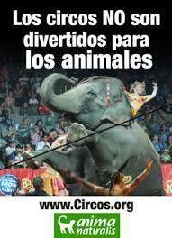 Los circos no son divertidos para los animales.