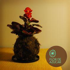 #Kokedama · Flor de azúcar