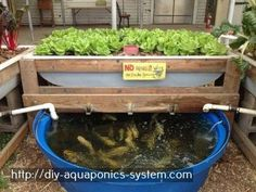 aquaponics atlanta - aquaponics pond liner.hydroponic greenhouse manufacturers 4640770594
