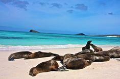 The Galapagos Islands.. Where sea lions, iguanas, and tortoises bask in the sun like bored movie stars.