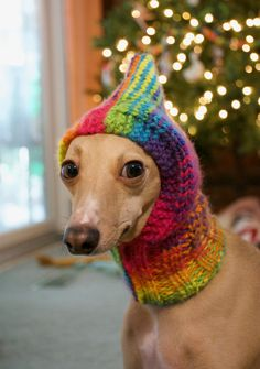 The Francesca Snood Hand knit, Dog hat Pattern available soon. #Italian Greyhound #Snood #knitting