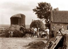 Farm life around Whitby, Yorkshire c1875-1910 Frank Meadow Sutcliffe - Victorian Photographer