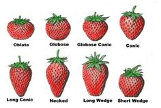 Strawberry shapes