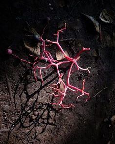 森に珊瑚。   #flower #花