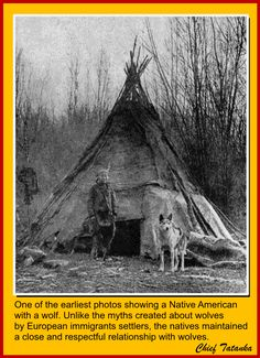 One of the earliest photos showing a Native American with A tipi (also tepee and teepee) and a wolf - unlike the myths created about wolves by settlers, some Indians maintained a respectful relationship with wolves. Native American Wisdom, Native American Beauty, Native American Photos, Native American Tribes, Native American History, American Indians, American Symbols, Native American Cherokee, European History