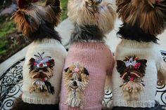 Check Out Yorkshire Terrier Haircut Female Yorkshire Terrier Haircut, Yorkshire Terrier Puppies, Cute Puppies, Cute Dogs, Dogs And Puppies, Yorkie Puppies, Yorkies, Small Dog Sweaters, Small Dogs
