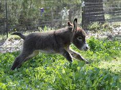 Feriți-vă de măgăruș #baby #donkey