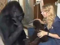 Koko le gorille - part 1 (sur4) fr - YouTube
