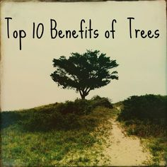 Top 10 Benefits of Trees  http://cepontzsons.com/top-10-benefits-of-trees/