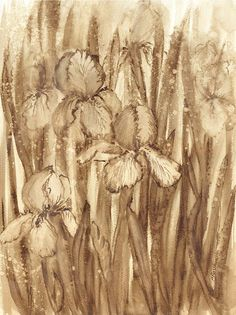Irysy - watercolour painted with coffee - Maria Roszkowska
