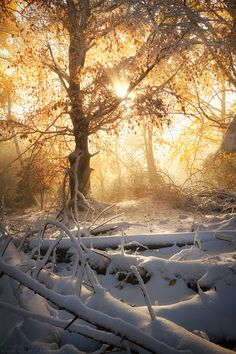 Fresh snow, fall colors, mist and golden light.@sherryDiesel@shherryann@has a pin for this golden hued snow capture!@