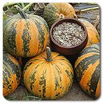 Organic Kakai Hulless Pumpkin for getting pumpkin seeds without the thick, fibrous hull! Just like in the stores!