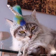 Unicorn Cat Hat  #catcostume #cathat #unicorn #kittycorn #catacorn #cataccessories #cats