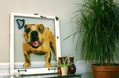 Woogm the Bull Dog - so cute! Spray paint artwork on a salvaged window pane Spray Paint Artwork, Spray Painting, Bull Dog, Artsy Fartsy, Labrador Retriever, Recycling, Window, Handmade Gifts, Dogs