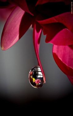 #Macro Photography,,reflective droplet.
