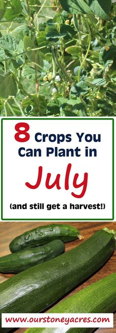 #2 - What can you plant in July and still get a harvest? There are plenty of warm season veggies that you can plant in July and still get a harvest by fall. This post is intended for those of you living in Zones 4 to 6 and maybe even Zone 7.
