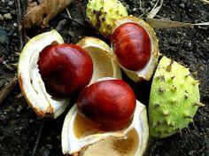Gesztenyék Coconut, Fruit, Beautiful, Food, Essen, Meals, Yemek, Eten
