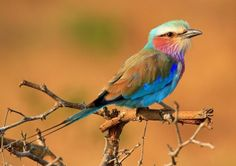 Apenas um pássaro