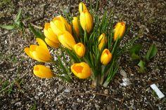 Spring Flowers in December.