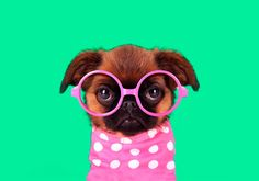 Yes, we have a word shortage! Great Woman Quotes, Great Women, Beauty Full, Beautiful Words, Animal Kingdom, Words Quotes, Pugs, Marriage, Dating