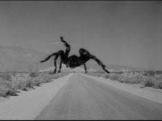 The giant tarantula as seen in: Tarantula (1955)