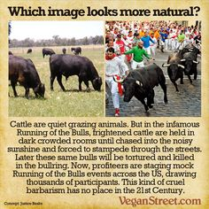 Which image looks more natural? (Running of the Bulls)