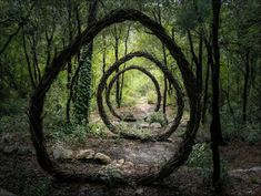 Artist creates mysterious sculptures in the woods of southern France