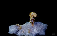 """Gold crystals on Quartz matrix from the Eagles Nest Mine in California, 3"""" long"""