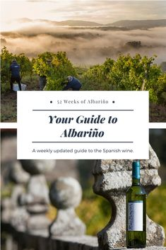 52 Weeks of Albarino is your complete guide to the wines and the grape, from their homeland of Rias Baixas in northwest Spain, to food pairings and unique cultural experiences. After 52 Weeks of Albarino, you'll be a Rias Baixas Albarino ambassador. Drop by often for new pairings, tips, and stories!