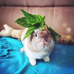 Daisy bunny with basil hat :) This is a boudoir pose for bunnies!