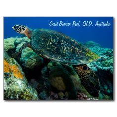 Sea Turtle Postcard