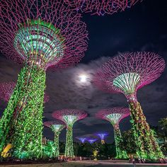 Garden by The Bay - Singapore ✨✨ Picture by ✨✨@_ShootTheWorld_✨✨Good night world