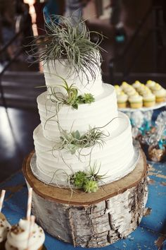 This cake is amazing.  My complements to the designer.  The use of aeroids plus the touch of succulents and then placed on the wood plank.  WOW!!  If you want to be green, this is the way to go!  DAVE