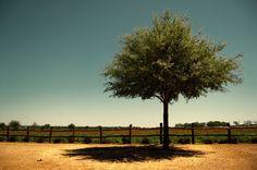 Una Galería de Fotos de Árboles.  Fuente: WebDesignMash  Foto Presentación:The Tree by =Konijntje