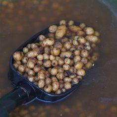 Fertig gekochte Tigernüsse zum Karpfenangeln.