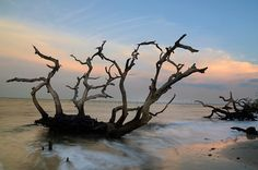 """One of the more unique places on the Georgia coast is Driftwood Beach, located on the north end of Jekyll Island. More or less a tree """"graveyard,"""" the beach came about due to beach erosion over the years, with the twisted hulks of dead oaks strewn all along the shoreline - making for eerie yet beautiful scenes like this one, taken at sunset yet facing east, the reflection of the setting sun on the opposite end still illuminating the clouds...."""