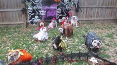 nice Bulldogs Dressed for Halloween Check more at http://viralleaks.us/2016/10/20/bulldogs-dressed-for-halloween/