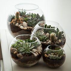 cactus and succulent terrarium . Succulent Arrangements, Cacti And Succulents, Planting Succulents, Cactus Terrarium, Decoration Plante, Dish Garden, Succulent Gardening, Succulent Ideas, Terraria